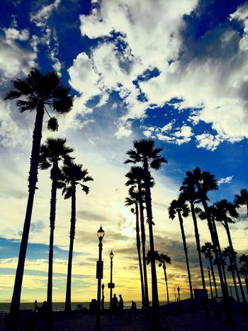 Palm Trees Sunset_collection Taking Photos Colors Sky_collection Waves, Ocean, Nature Amazing View Beachphotography Paradise Taking Photos Sunset Clouds And Sky Sky_collection Capture The Moment Magic Moments Magnifique California Coast BestTripEver Blessed  Huntingtonbeach Enjoying Life Roadtrip Pier Sun Beautiful