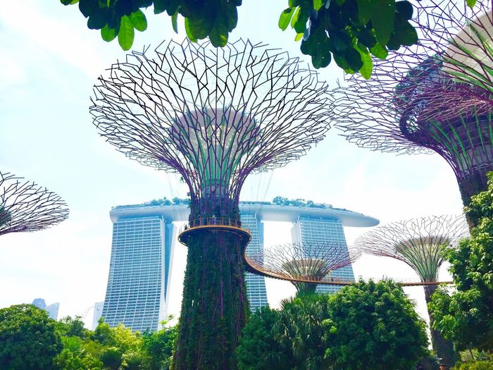 Tree Outdoors Sky No People Building Exterior Urban Skyline Financial District  Asian Culture Singapore Marina Bay Sands Low Angle View Day Amusement Park Built Structure Architecture Nature Gardens At The Bay