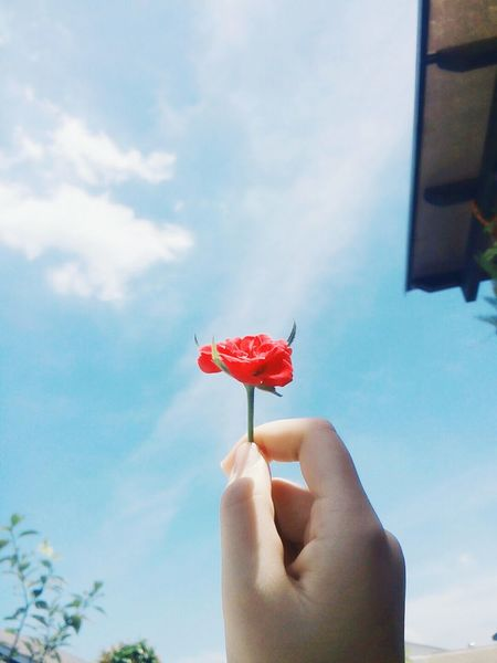 Flower🌹 Human Body Part One Person Human Hand Red People Personal Perspective Food And Drink One Woman Only Only Women Adults Only Holding Food Day Refreshment Adult Fruit Cocktail Lifestyles Water Outdoors Cloud - Sky Roof No People Nature Building Exterior