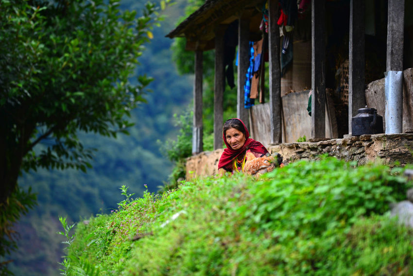 Portrait of a Gurung woman in the mountains. Gurungs are the biggest ethnic group in the Himalayas. Nepal Nepalese Culture Tribal Annapurna Circuit Countryside Elder Woman Himalaya House Isolated Village Landruk Leisure Activity Lifestyles Looking At Camera Mature Woman Mountain Village Nature One Person Outdoors People Portrait Real People Senior Woman Tree Tribe Village
