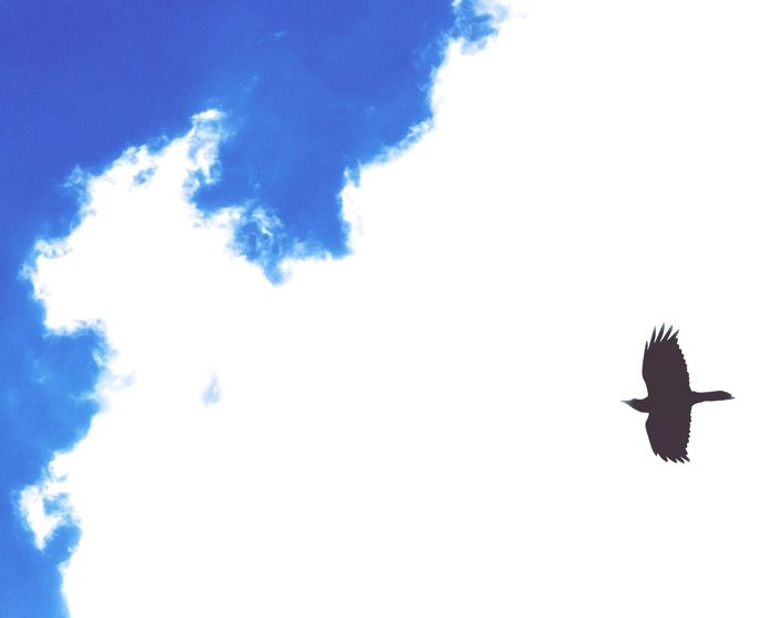 Flying Bird Animals In The Wild Cloud - Sky Animal Wildlife Sky Spread Wings Outdoors Day One Animal Mid-air Low Angle View Nature Motion Animal Themes No People Beauty In Nature Bird Of Prey