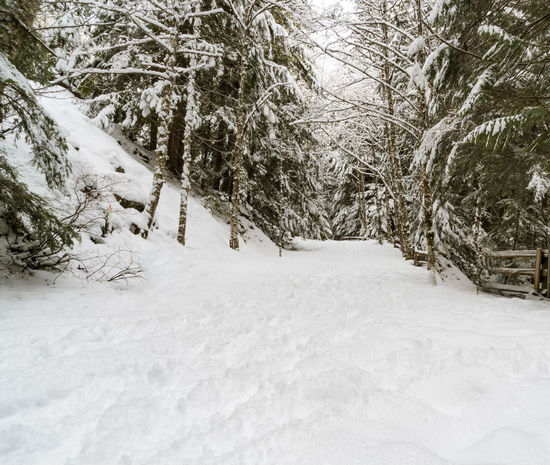 #beautifulbc #pathtobrandywin #supernaturalBC Beauty In Nature Cold Temperature Day Landscape Nature No People Outdoors Snow Tranquility Tree Weather Winter