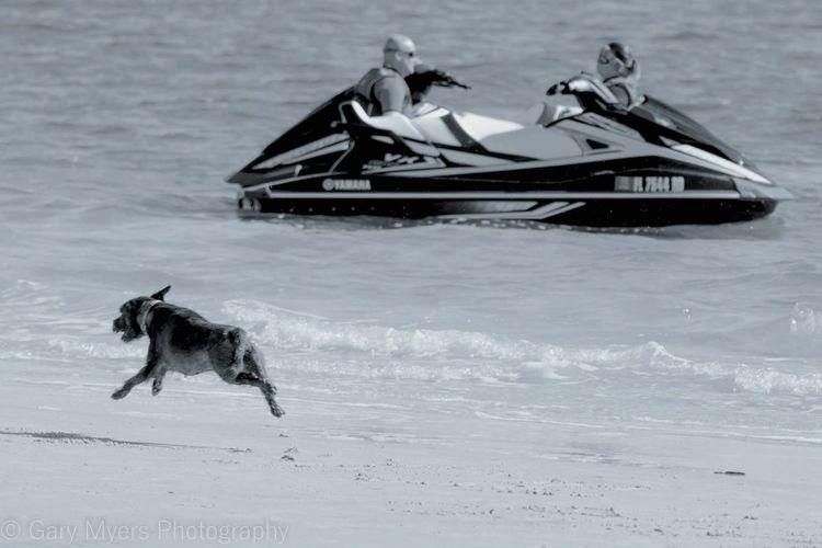 Dog Beach Beach Photography Beach Life Beach Fun Sanibel Sanibel Islands Florida Florida Life Animal Themes