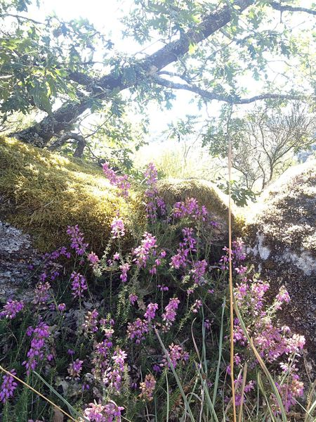 Caminho para o Castelo Path to the castle Castro Laboreiro Geres Portugal Tree Flower Nature No People Nofilter