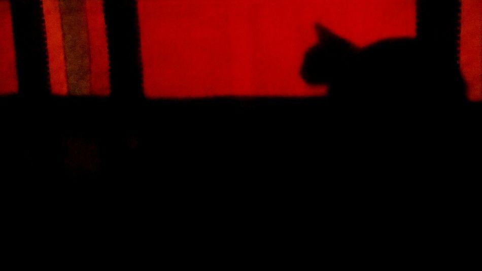 Shadow Cat Taking Photos BLACKSHADES Animals Blackcats Babycat