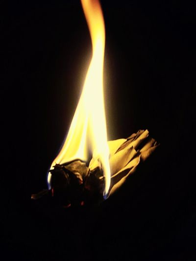 "Sage"" Burning Sage Cleansing Ritual Warm Positive Vibes Mood Black Background Illuminated Flame Heat - Temperature Burning Single Object Glowing Fire - Natural Phenomenon"
