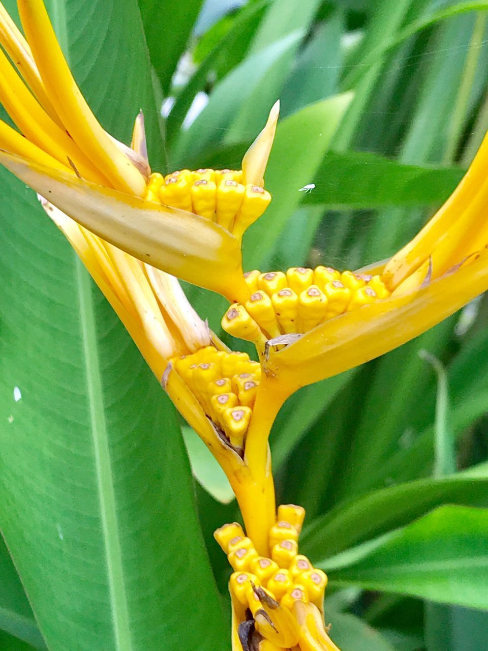 plant, yellow, flower, flowering plant, beauty in nature, growth, close-up, green color, vulnerability, fragility, freshness, plant part, leaf, day, nature, no people, petal, botany, inflorescence, flower head, outdoors