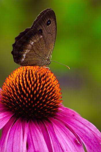 butterfly] Butterfly Flowers 蝶々 花 Flower&butterfly