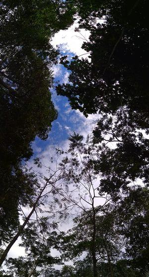 jungle Bluesky Forest Sky Tree No People Nature
