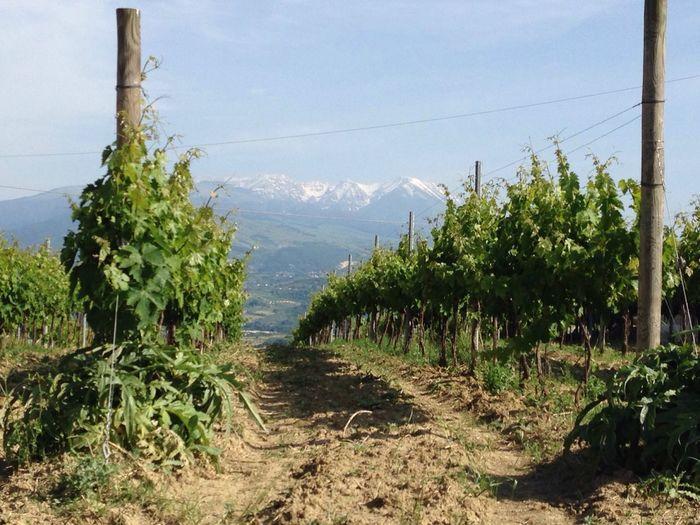 Maiella Landscape Abruzzo Italia Italy Vigneto Vino Winehouse