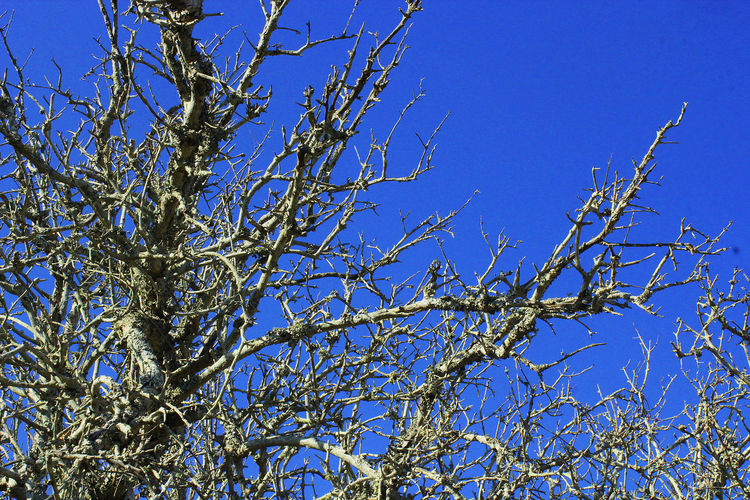 Bare Tree Branch Clear Sky Nature Silhouette Tree Tree Trunk