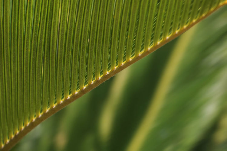 Green Color Leaf Plant Part Plant No People Close-up Nature Beauty In Nature Growth Palm Leaf Natural Pattern Backgrounds Palm Tree Pattern Full Frame Tropical Climate Focus On Foreground Leaves Rainforest Selective Focus Outdoors