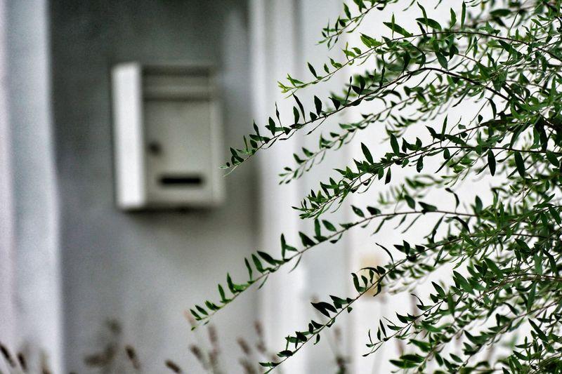 Leaves growing against house