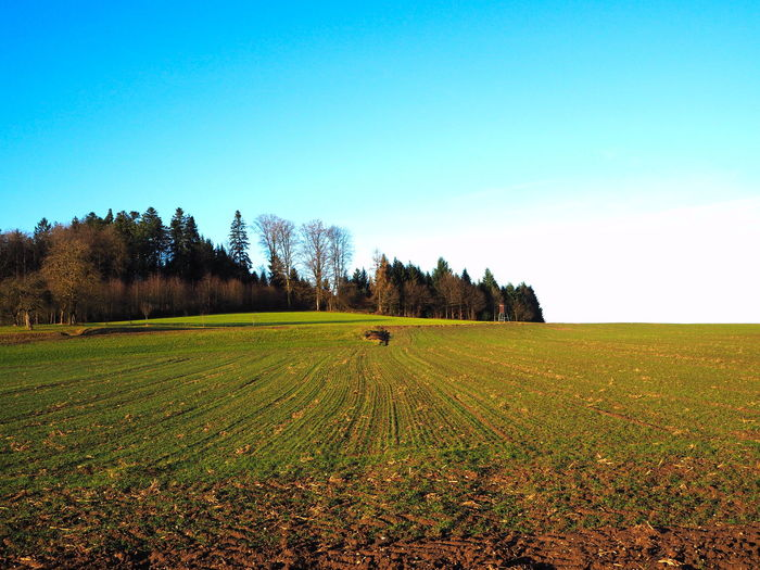 blue sky over filed Baden-Württemberg  Green Color South Agriculture Beauty In Nature Blue Blue Sky Clear Sky Color Day Field Forest Germany Growth Landscape Nature No People Outdoors Plowed Field Rural Scene Scenics Sky Tranquil Scene Tranquility Tree