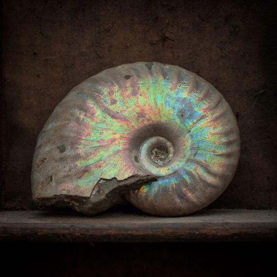 Ammonites  Fossil Fossils StillLife