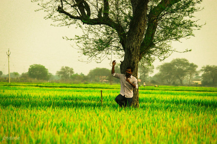 Green paddy fields..... Golden hour Agriculture Rural Scene Outdoors Field Nature Photography