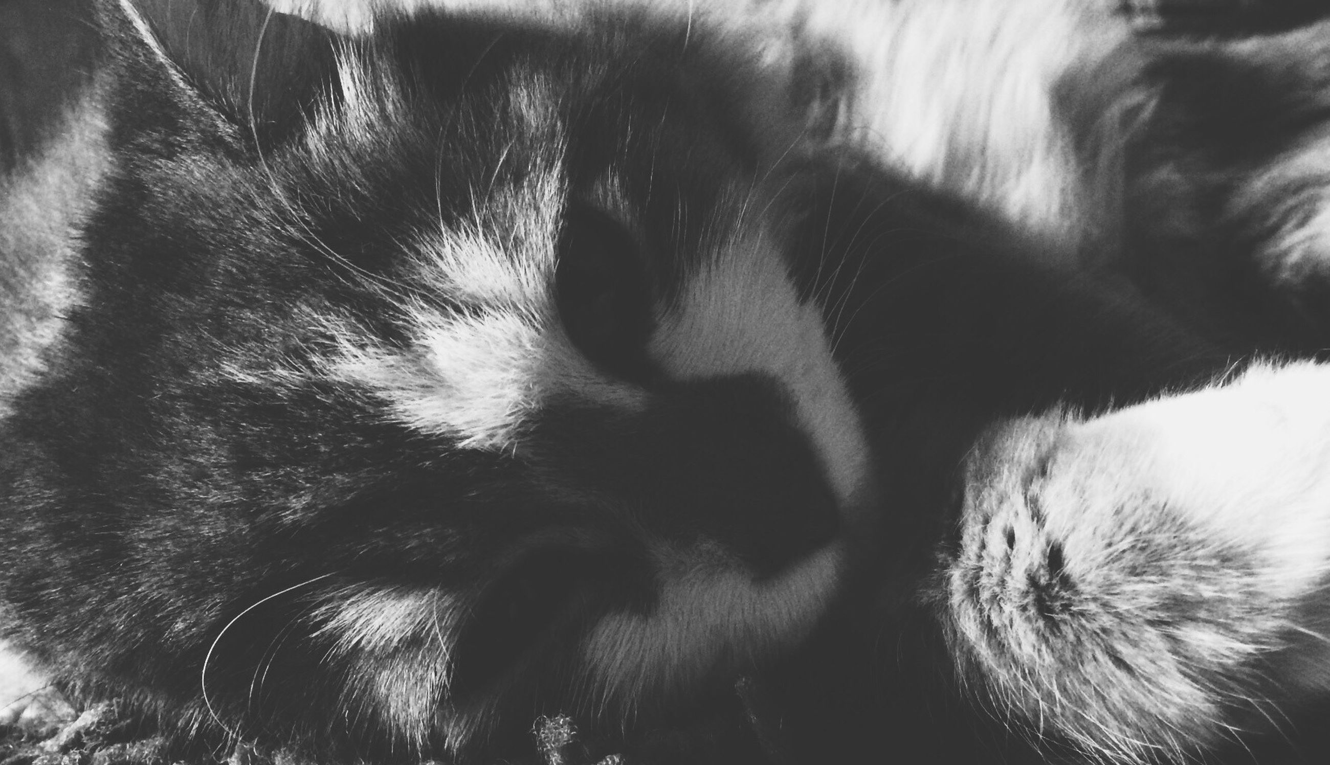 pets, domestic animals, mammal, animal themes, one animal, domestic cat, cat, feline, whisker, close-up, indoors, animal head, animal body part, no people, relaxation, part of, black color, zoology, animal eye, animal