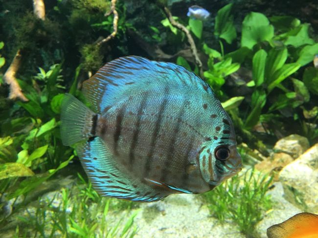 Animal Animal Themes Animal Wildlife One Animal Animals In The Wild Nature Vertebrate Fish Beauty In Nature Swimming Underwater Water
