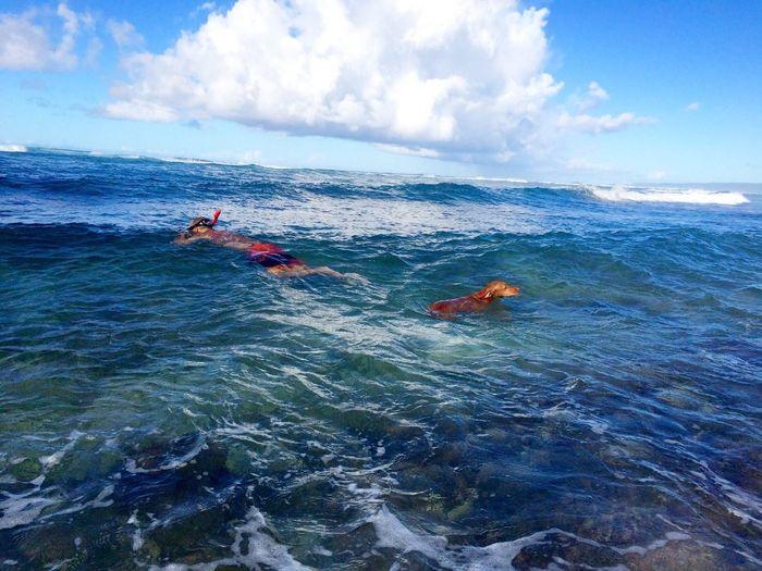 Thebeachlife Ocean Life Lucky We Live Hawaii Roxyvizsla Vizsla Relaxing
