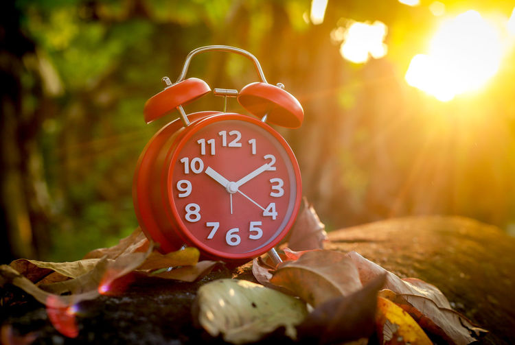 Red Alarm Clock Alarm Clock Clock Time Number Clock Face No People Accuracy Nature Tree Selective Focus Communication Minute Hand Close-up Red Food And Drink Clock Hand Food Leaf Plant Single Object Change Hour Hand My Best Photo