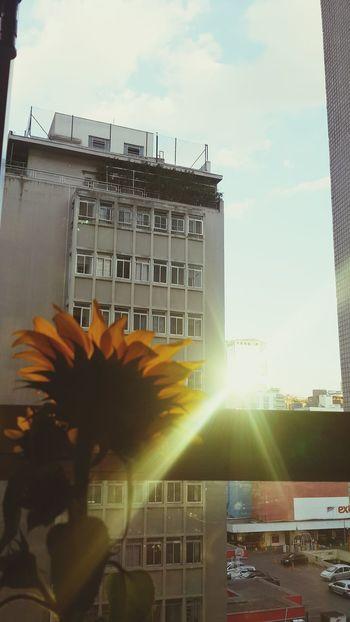 Girassol sunset São Paulo, Brasil