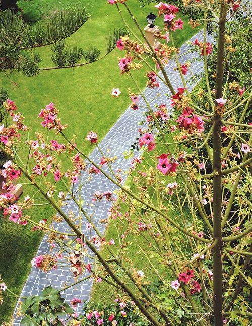 Garden Tenerife