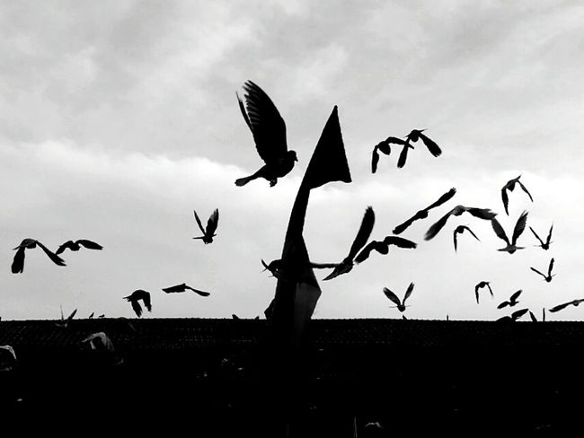 Bird Animals In The Wild Animal Wildlife Flying Animal Themes Large Group Of Animals Flock Of Birds Silhouette Outdoors Spread Wings Nature Stork No People Colony White Stork Seagull Sky Flamingo Day Vulture EyeEmNewHere