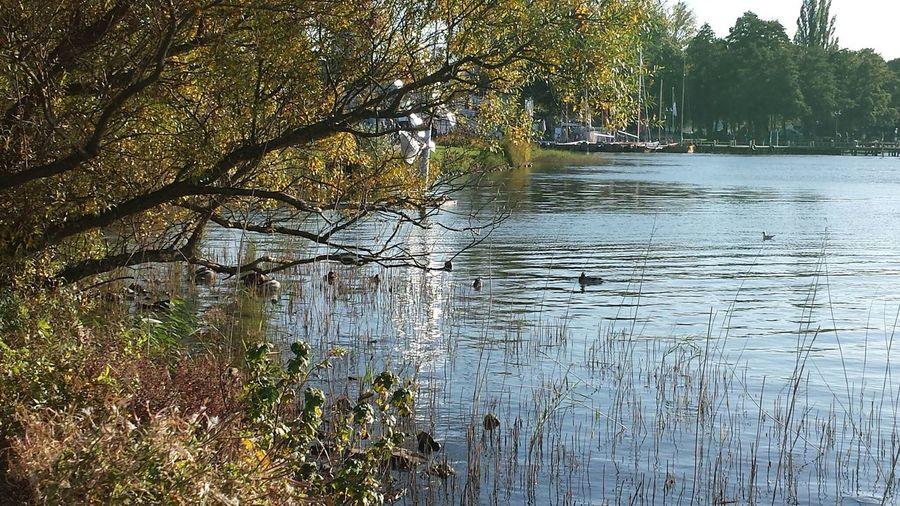 Ein schöne Plätzchen Steinhude-am-meer.de - Dein Meer-Foto Lovely Weather