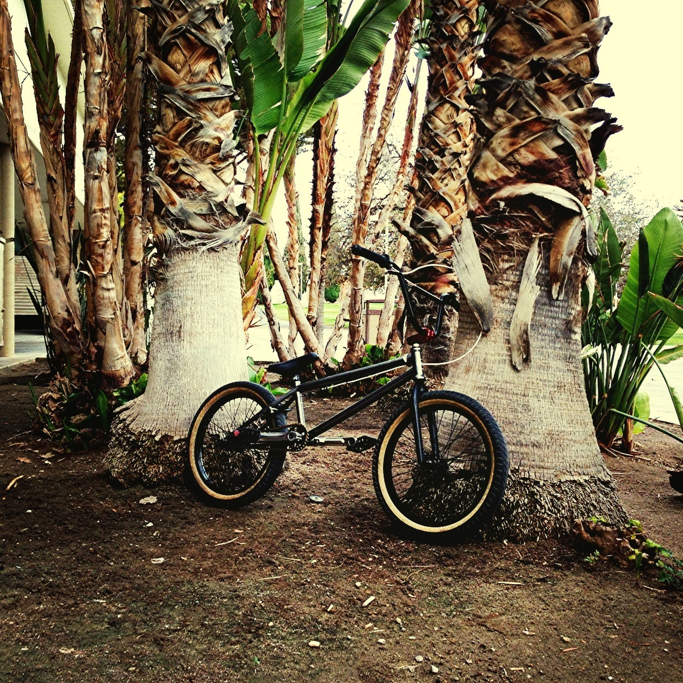 bicycle, land vehicle, transportation, mode of transport, stationary, parking, parked, plant, wheel, growth, tree, sunlight, no people, outdoors, day, shadow, street, absence, wall - building feature, potted plant