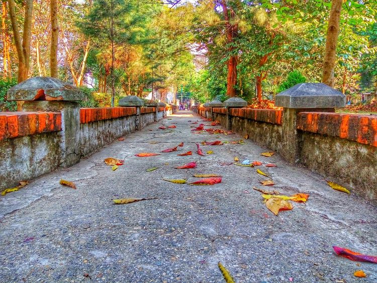 Leaves 🍁 Yagon Beauty Is Everywhere  No People Myanmar View Myanmar Beauty In Nature Outdoors