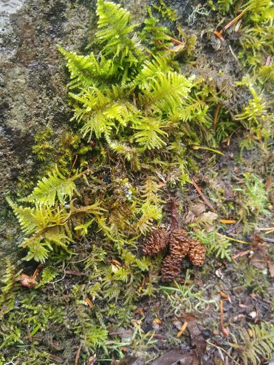 Growth Green Color Leaf Nature No People Outdoors Full Frame Beauty In Nature Freshness Tree Green Lichen Or Not Moss Rock - Object Forest Treethugger Nature_collection Landscape_collection EyeEmNatureLover High Angle View Tree Stump Love Heart Shape Frozen