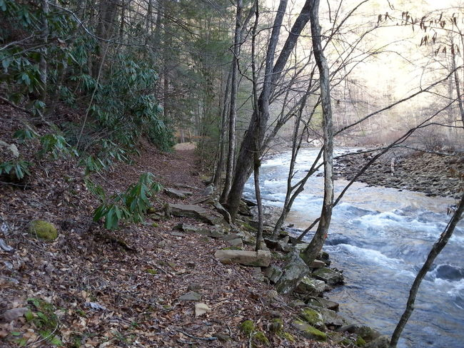 Tree Nature Beauty In Nature No People Water Day Outdoors Growth Creek Running Water Rocks Landscape Walking Trail