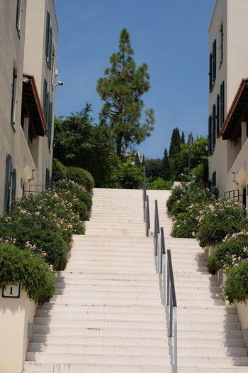Steps, Sun Gardens Residences, Orasac Composition Croatia Flowering Shrub Flowering Shrubs Low Angle View Steps Tree A Long Way Up Blue Sky Direction Footpath Full Frame Nature No People Orasac Outdoor Photography Railings Residences Residential District Staircase Steps And Staircases Sunlight The Way Forward Tourism Travel Destination
