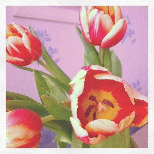 8марта цветы Тюльпаны поздравиляю