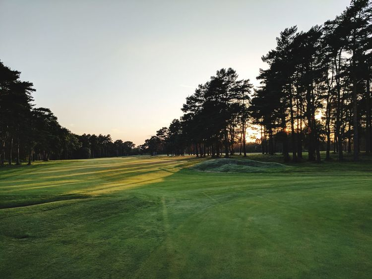Tree No People Nature Outdoors Sunset Beauty In Nature Tranquility Landscape Scenics Day Sky Golf Course Grass