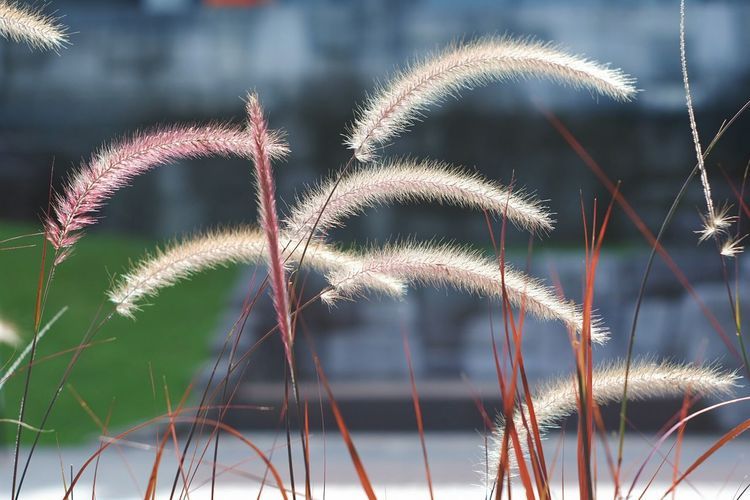 Close-up of reed growing on field against sky