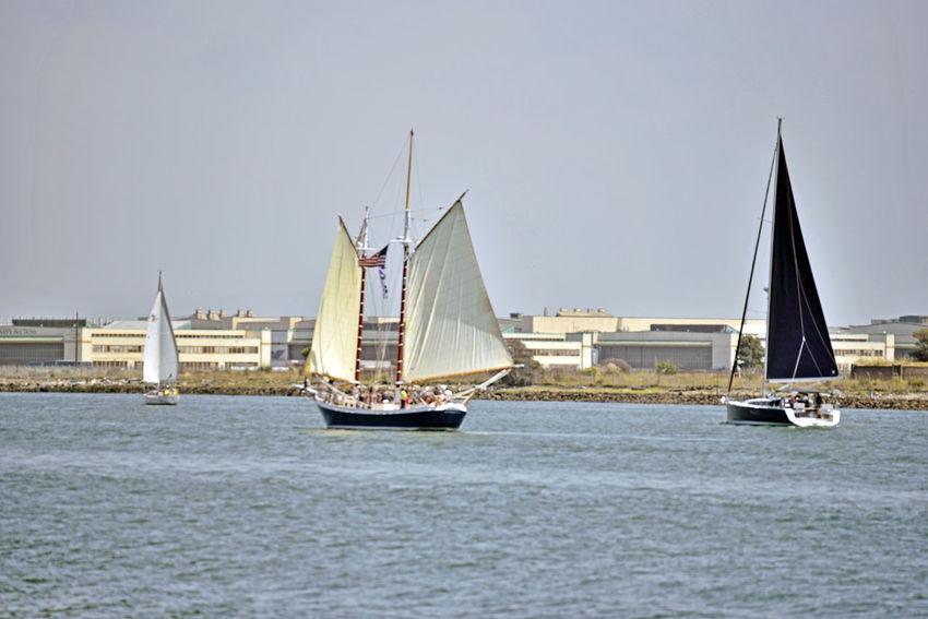 Sailboats @ Middle Harbor 3 Port Of Oakland, Ca. Embarcadero Cove Waterfront Alameda Shoreline Estuary Sailboats Colorful Sails Motor Sports Sport Water Sport Aquactic Sports Wind Power