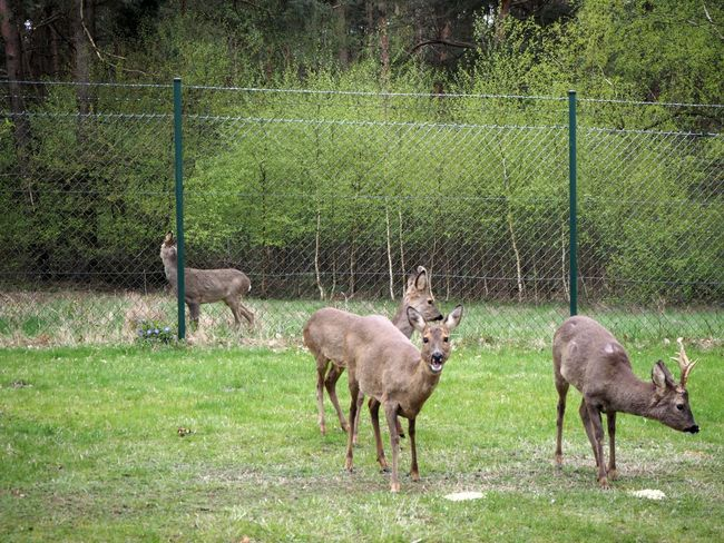 deer Animallovers Animals In The Wild Deer Outside Photography Wild Wildlife Photography