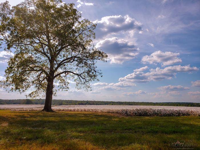 Tree Rural