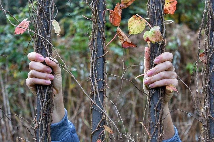 Human Hand Human Body Part People Holding Day One Person Outdoors Nature Trapped Autumn Autumn Colors Fence Holding Fence Woman Forest Old Fence Vintage Colours Of Nature Colours