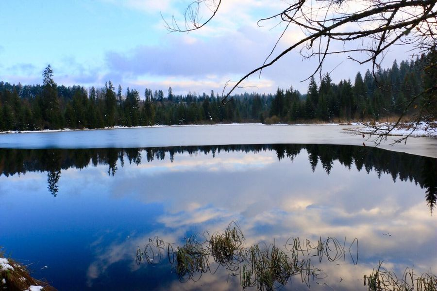 Tree Reflection Lake Nature Water Sky Tranquility Tranquil Scene Beauty In Nature Scenics No People Cloud - Sky Outdoors Day Cold Temperature Forest Winter Snow Beauty In Nature