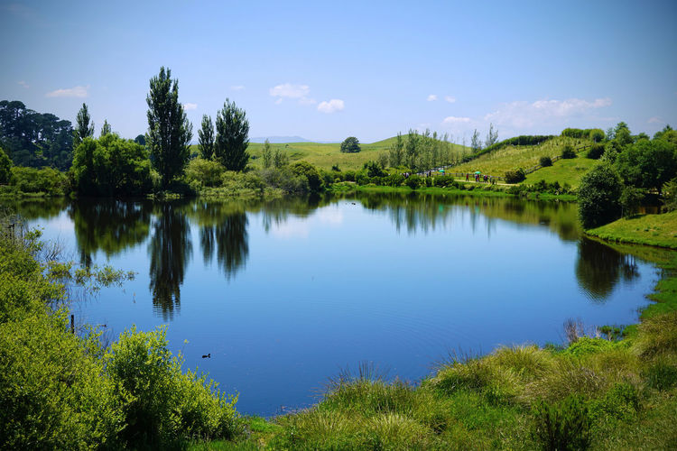 2017 Grass Green Hobbit Beauty In Nature Blue Day Flower Grass Growth Lake Nature New Zealand Outdoors Reflection Scenics Sky Tranquil Scene Tranquility Tree Water ニュージーランド ホビット ホビット村