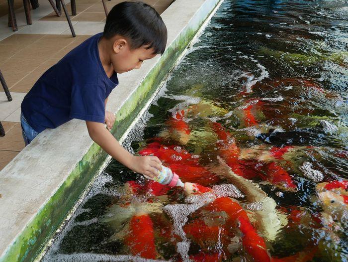 Boy feeding fish in water