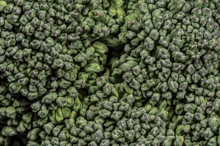 broccoli plant macro close up Food Cabbage Macro Ingredients For Cooking Extreme Close-up Nature Full Frame Healthy Eating Vegetable Wellbeing Close-up Backgrounds Freshness Textured  Pattern Elements Order In Nature Order In Chaos Agriculture Market Food Processing Plant Raw Food Large Group Of Objects Organic Brussels Sprout