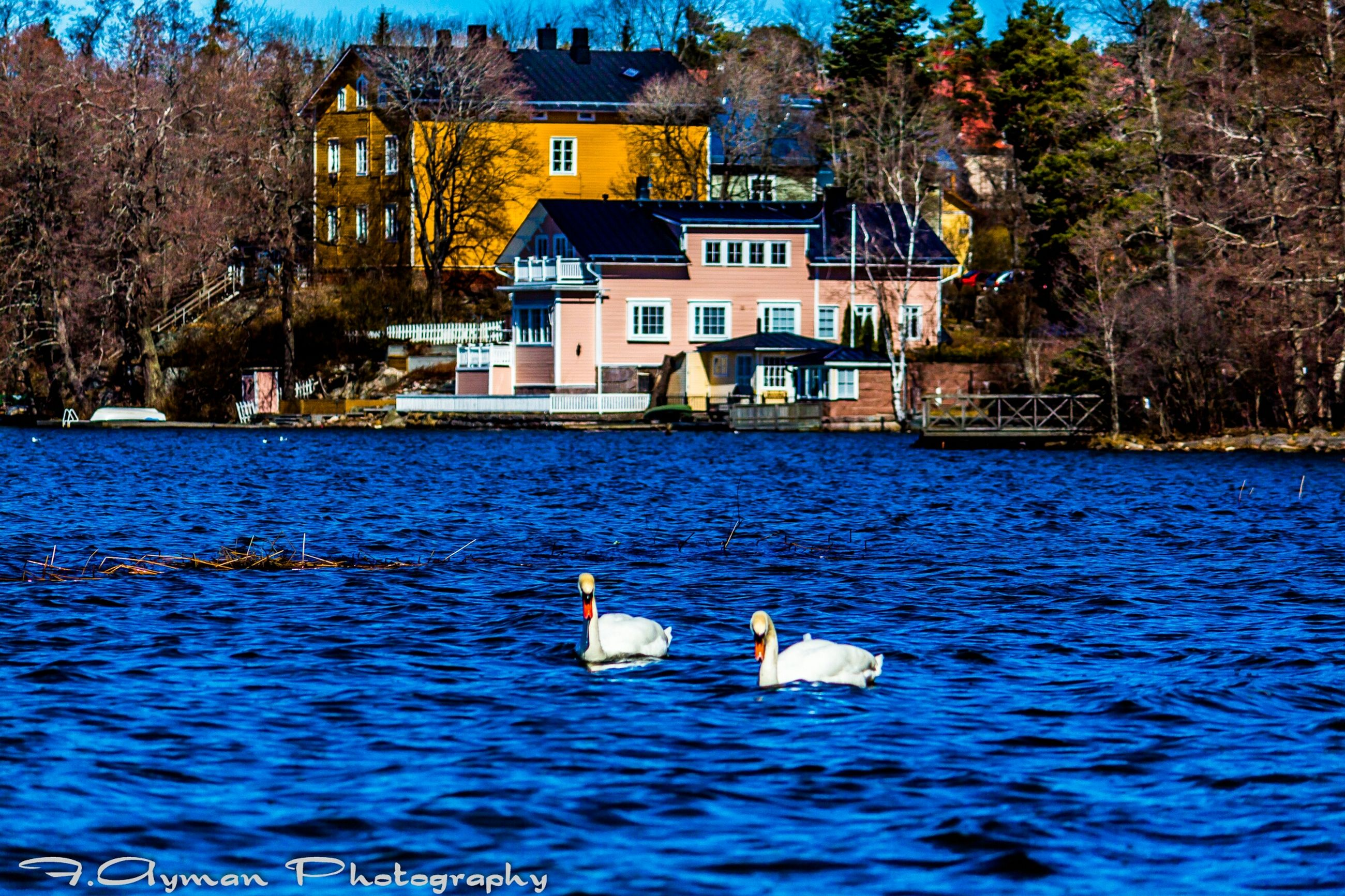 water, tree, building exterior, architecture, waterfront, built structure, lake, bird, rippled, nature, day, swan, outdoors, river, house, swimming, blue, no people, tranquility, wildlife