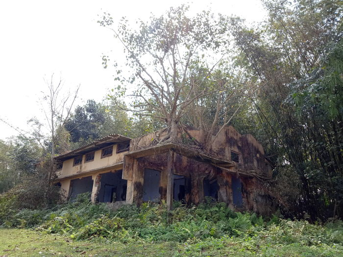 Abandoned house on field against trees in forest