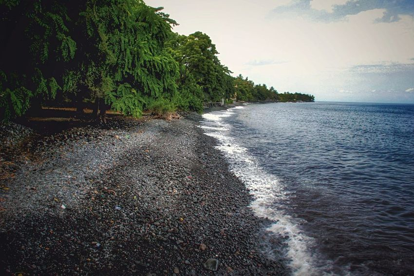 TulambenBeach Sea Beach Tree Nature Water Sky Summer Sand Beauty In Nature Outdoors No People Growth Beauty Day Bali, Indonesia Tulamben Travel Destinations Travel Photography Live For The Story Lost In The Landscape