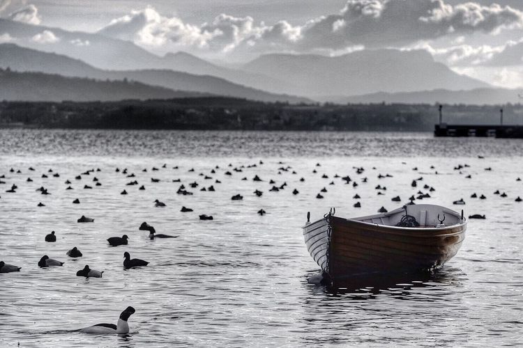 Boats moored by birds swimming in lake against mountains