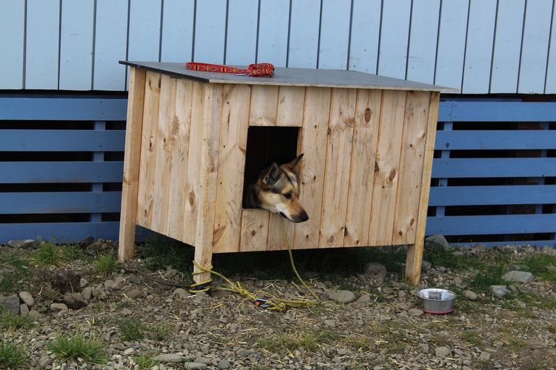 cute pup Animal Themes Animal Architecture Built Structure One Animal No People Day Vertebrate Mammal Building Exterior Pets Domestic Wood - Material Domestic Animals Building Outdoors Animal Wildlife Nature Entrance Wall - Building Feature