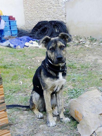 Pequeña dina First Eyeem Photo Dog Lover